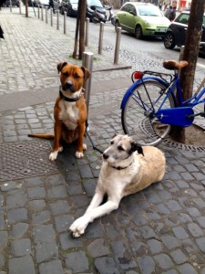 Italian dogs waiting patiently for their owners outside of a coffee shop.