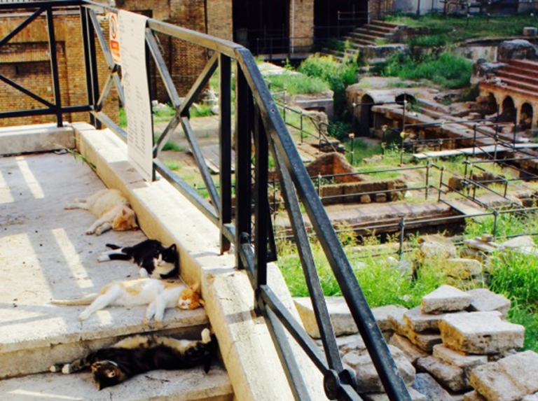 How many cats can you spot among these historic Roman ruins?